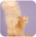 bottom siberian cat female to the photographer