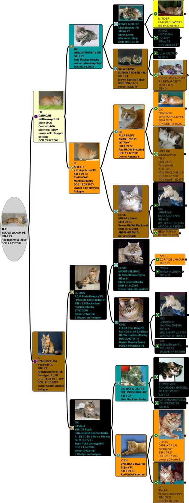 Pedigree images with pictures of almost every cat. The photos were selected to adulthood.